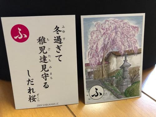 金蔵寺しだれ桜